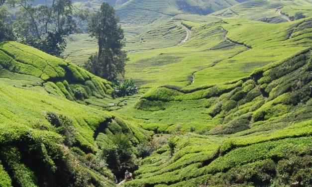 Que faire, voir ou visiter lors de votre voyage en Malaisie